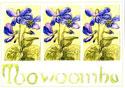 Toowoomba Violets